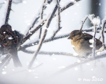 Little Winter Birds Photo -Bird Photographic Print  - Bird Photography -  Winter - Snow - Nature