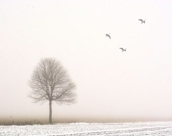 "Tree in fog dreamy landscape photography minimal birds pale autumn pink  - ""Through the fog""  8 x 10"