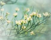 Nature Photography, Dogwood Flower, Spring Home Decor, Flower Art - Photograph for Nursery, teal blue, butter yellow, fine art botanical art