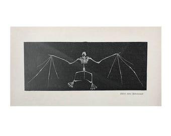 1900 BAT SKELETON LITHOGRAPH  original antique print - German Chiroptera print - Roussette Chauve souris Pipistrello - scary halloween decor
