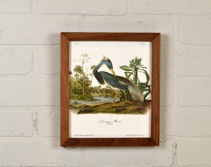 """Framed Audubon Bird Print """"Louisiana Heron"""" Full Color Reproduction - Solid Natural Walnut Peewee Style - IN STOCK - Same Day Shipping"""