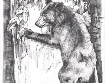 Treed Bear Cub - Open edition print of an original drawing (fits 11x14 frame)