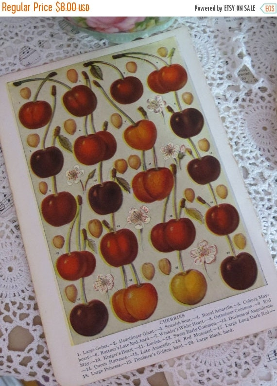ON SALE Book of Garden Flowers-Reference-Audubon-Book Plates-CHERRIES