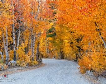Nature Photography Landscape Photography  Forest Trees Fall Photography Autumn road home decor  Fine Art Photography Print