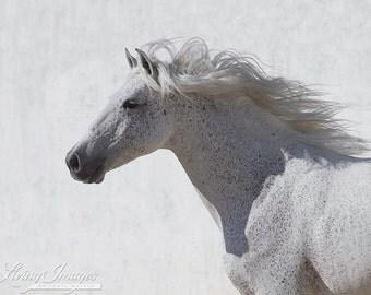 The White Stallion Runs By - Fine Art Horse Photograph - Fine Art Print - Horse - Lusitano
