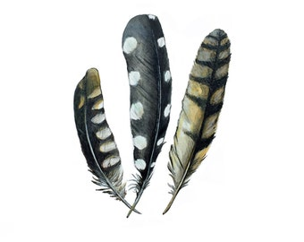 FEATHERS | Feather Art
