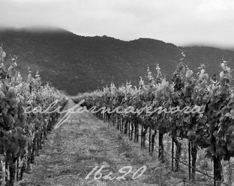 Clean Cut Grapes Photograph of California Vineyard and Winery