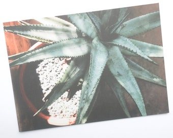 ALOE VERA Post Card Print - 5x7 Original Photography, Aloe Print, Modern Succulent Photo, Gift for Her, Gift for Him, Good for the Soule