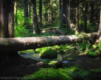 Forest Photography, Nature Decor, Moss Photo, Woodland Decor, Dark Forest, Nature Photography, Green Decor, Fallen Tree, Forest Landscape