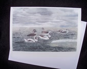For Nathan B. 4 Packs of Six - Long-tailed Ducks in a Snow Squall - the Feast - Bohemian Waxwings