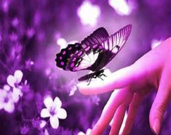 Butterfly Kisses Fragrance Oil - Candle/Soap Making - Strong/Uncut - Free Shipping in USA