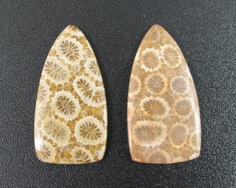 Beautiful Fossil coral  cabochon pair, earrings,set stone, Natural stone, , Jewelry making supplies S7462
