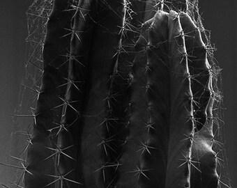 Cereus cactus - Downloadable black and white print