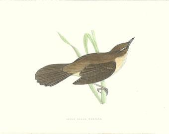 Bird Print Antique, Great Sedge Warbler, History of British Birds, F O Morris, 1851