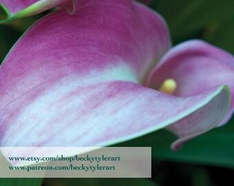 Calla Lily Fine Art Photo Print