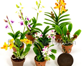 7 pcs Premium Vanda  Rhynchostylis gigantea Dendrobium Bulbophyllum Orchid dollhouse miniature Air Dried Clay Flower 1:12th Wedding Souvenir