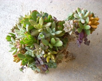 Succulent Turtle Living Topiary