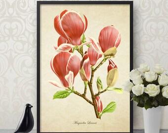 Botanical Print, Magnolia Lennei Print, Flower Print, Magnolia Botanical Print, Magnolia Art Print, Decorative Botanical Reproduction FL078