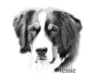 Custom dog Portrait - Bernese Mountain Dog sketch - sketch from photo - Dog art - digital sketch portrait - Pet Art - Custom Dog portrait