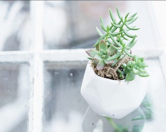 Live Succulent Arrangement in Small Hexagon Vase