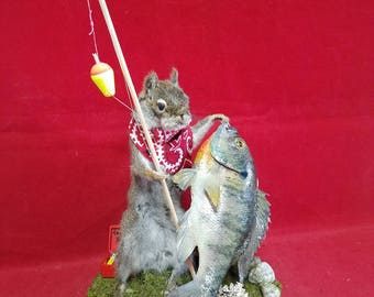 Taxidermy Fishing Squirrel Display-anthropomorphic-blue gill fish Taxidermy-gone fishing-