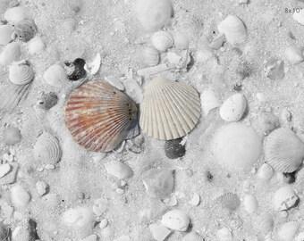 Beach decor, seashell photography, art photo print, red sea shell picture, sand coastal ocean wall decor large canvas 8x10 12x12 12x24 20x30