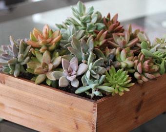 Succulent Arrangement, Centerpiece, Terrarium