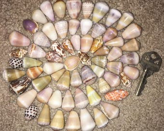 Hawaiian shells