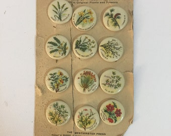 Plants and Flowers of Palestine Metal Pins New Westminster Series