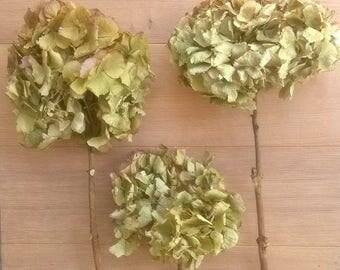Dried Hydrangea Microphylla Bunch - Wedding Decoration - Rustic Bouquets - Wreaths