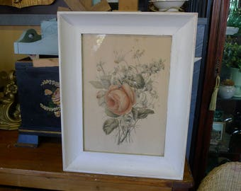 Cottage rose framed botanical watercolor in painted wood frame