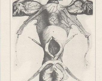 "Vintage Medical print  by Regnier de Graaf   ""De mulicrum organis..."" 1672"