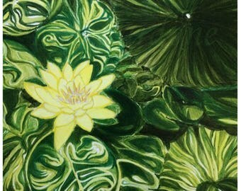 Water Lily Bloom Print Card - 5.5 in. x 5.5 in.