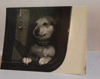 """Izzy the RV Dog Card With Message Inside 4.25"""" x 5.5"""" (FREE SHIPPING!)"""