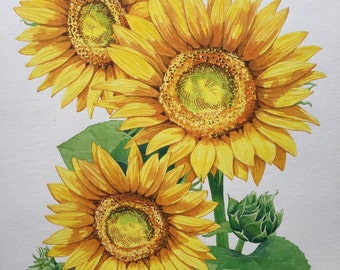 Original Watercolor Painting of Sunflowers