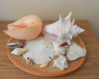 A Dish of Sea Shells