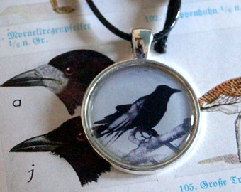 Raven Crow crow - pendant with chain of nodes