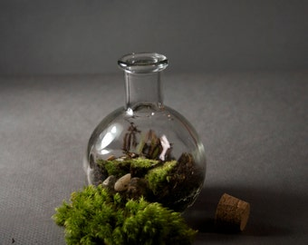 moss in a Bottle