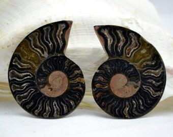"e3591x RARE 1 in 1000 BLACK Ammonite PAIR Deep Crystals Large 2.22"" 110myo 56mm"