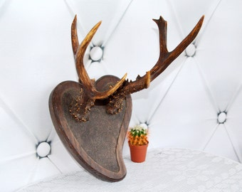 Vintage Wooden Plaque mounted Horns, antlers,Taxidermy, Stylish wall sculpture,  Gift for him