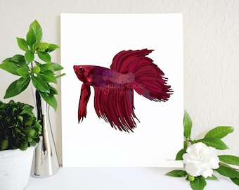 Red Betta Fish Art Print, Betta Fish Memorial, Red Beta Fish Memorial, Siamese Fighting Fish, Fish Lover Gift, Aquarium Art, Pet Fish Gift