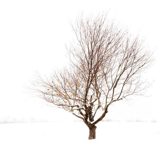 Landscape Winter Tree Shaw farm Sutton MA 8x8 10x10 12x12 16x16