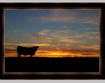 Sunset cow photo print - Black Angus cattle, ranch photography, cattle photography, black angus, western art, wall decor. Free Shipping