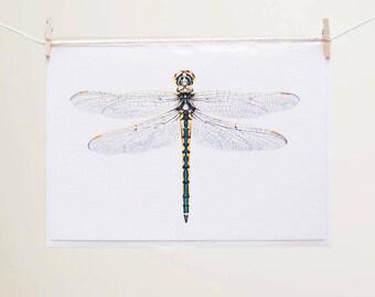 Australian Emerald Dragonfly - Blank Greeting Card