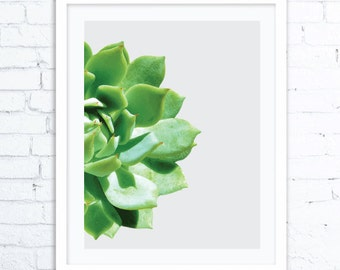 Botanical Decor, Succulent Print, Digital Print, Cactus Print Poster, Digital Download, Cactus Photography, Cactus Wall Art, Cactus Decor