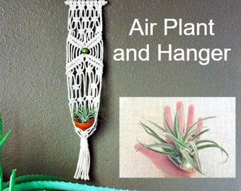 Plant and Macrame hanger, Macrame Air Plant hanger, Gift for Mom, Air Plant hanger,  Airplant, Tillandsia holder, gift for her, Mother's Day