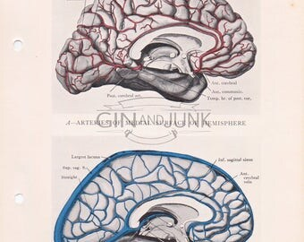 Vintage colourful print of the human brain and veins of the medial surface from 1934. Anatomy Print, Human Brain Print, Medical Drawing