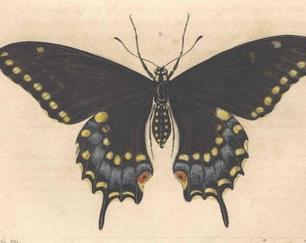 1862 Antique INSECTS BUTTERFLIES ENTOMOLOGY Print Hand Colored Engraving Original Book Plate