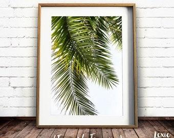 Palm Tree Print, Green Tropical Print, Palm Leaves, Palm Tree Photo, Palm Tree Poster, Coconut Palm, Palm Leaf Print, Printable Art