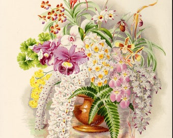 flowers-16803 - group of Orchids and ferns in vase digital illustration plate vintage picture image public domain image antique book page